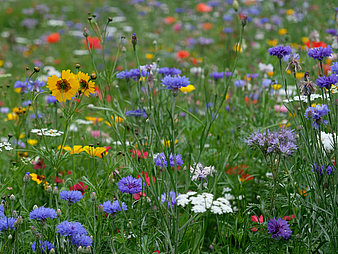 [Translate to English:] Blumenwiese