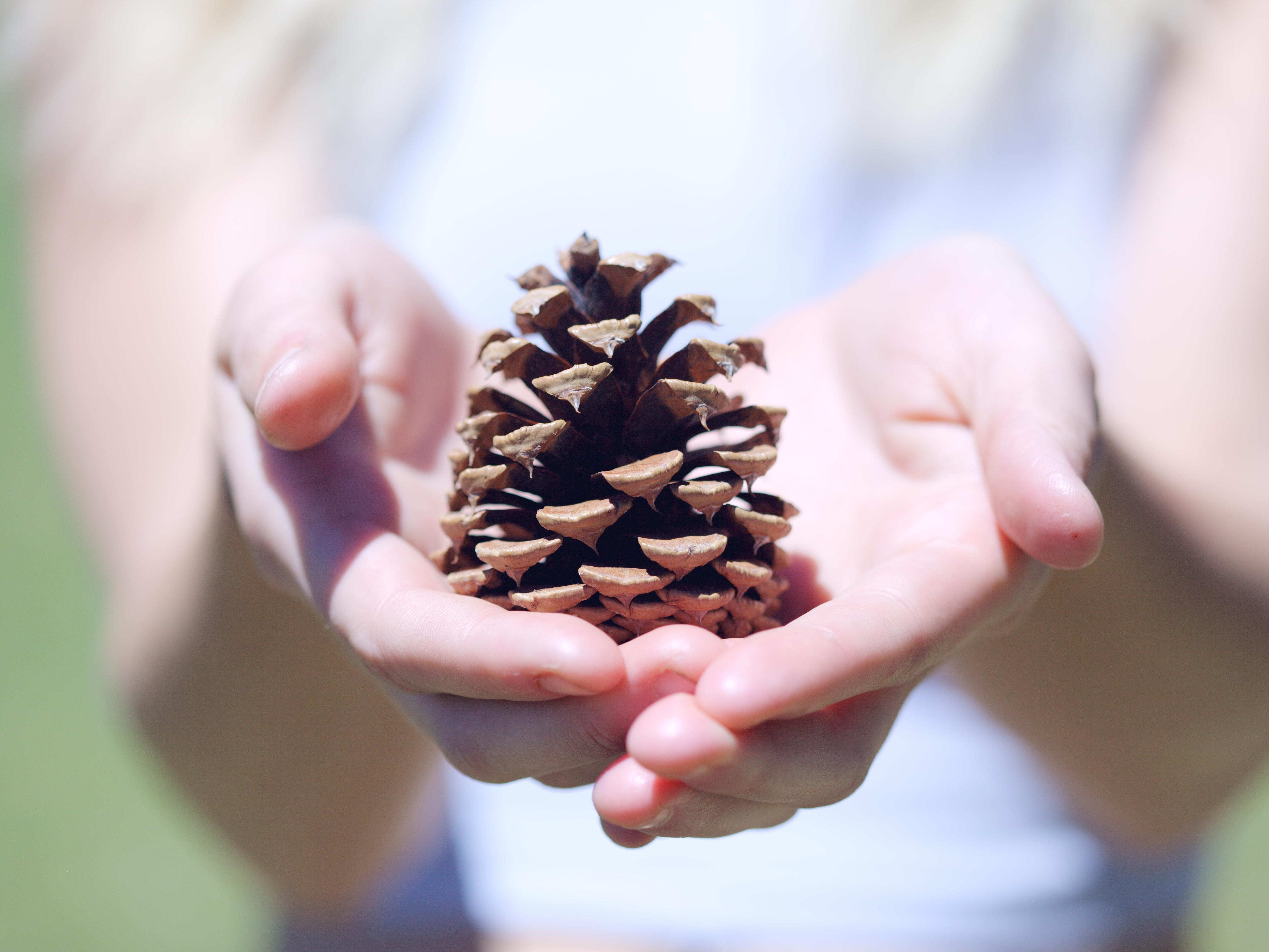 Woman holding pine cone in her hands