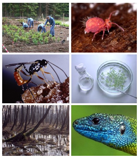 A photo collage provides different research approaches in Ecology.